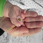 Las manos canción infantil