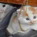 Los gatitos letra de canciones infantiles